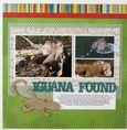 Iguana Found