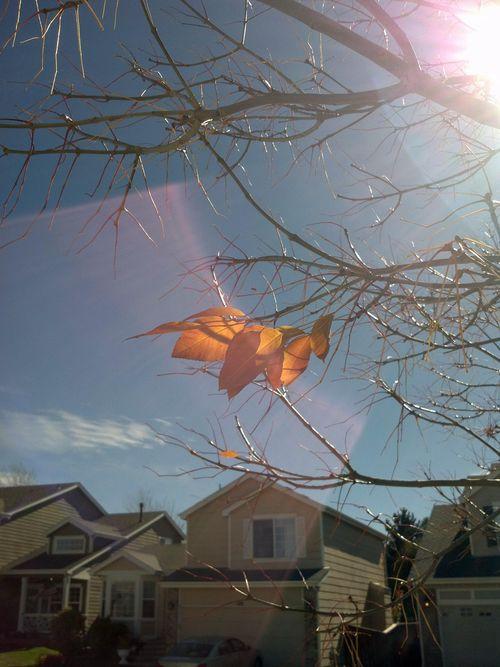 10 23 12 last leaves